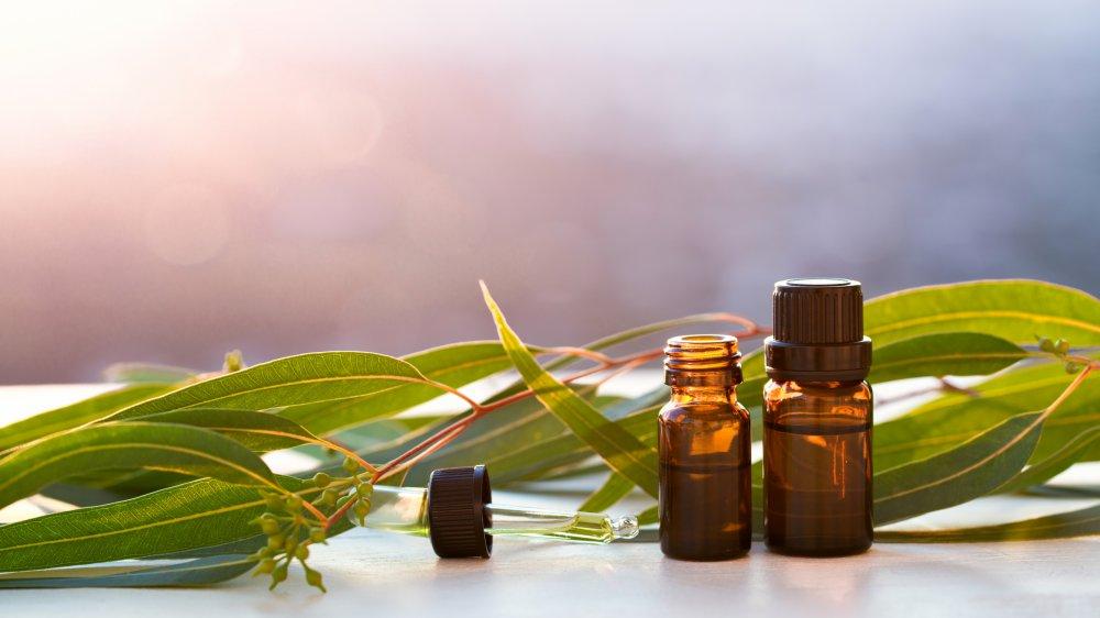 Huile essentielle d'arbre à thé pour la beauté : propriétés et ...